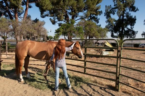 Student pets horse.