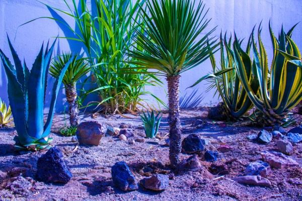 close up of desert plants