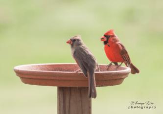 tworedbirds