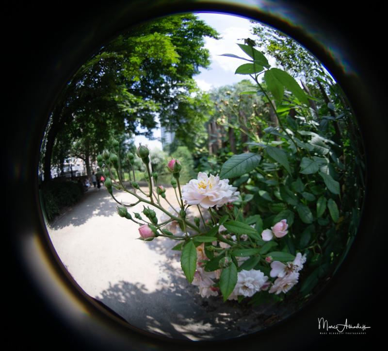 F3.5, Lensbaby 5.8mm F3.5 Circular Fisheye- ISO 100-1-400 s 007