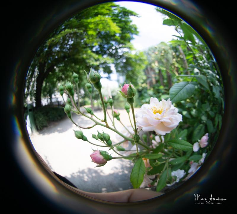 F3.5, Lensbaby 5.8mm F3.5 Circular Fisheye- ISO 100-1-400 s 008