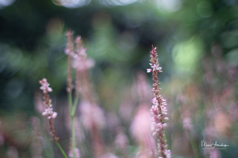 F1.2, Neewer 35mm F1.2- ISO 100-1-320 s 031
