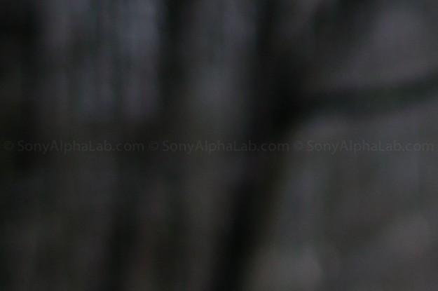 Rokinon 85mm f/1.4 lens @ f/1.4