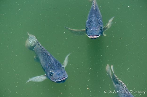 Seaworld - Sony Nex-6 w/ sel55210 lens @111mm, f/5.6, 1/200sec, ISO 125