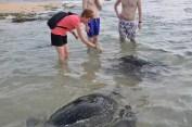 turtlefeedinghikaduwa