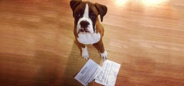 my-dog-ate-my-tax-reciepts-1