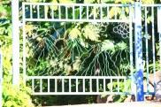 bent steel nature gate by Sooriya Kumar