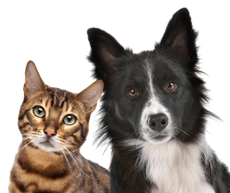 How to give pet cbd