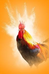 Chinees-nieuwjaar-met-de-Vuur-Haan-SophiaMagazine