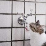 duurzame-dinsdag-water-moet-apps-sophiamagazine