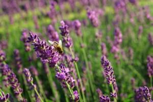 duurzame-dinsdag-beautysalon-paars-en-weleda-sophiamagazine
