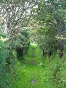 Trail in Ireland [Photo from PDPhoto via Creative Commons]