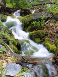 Stream in Sequoia National Park, U.S. [Photo courtesy of PD Photo via Creative Commons]