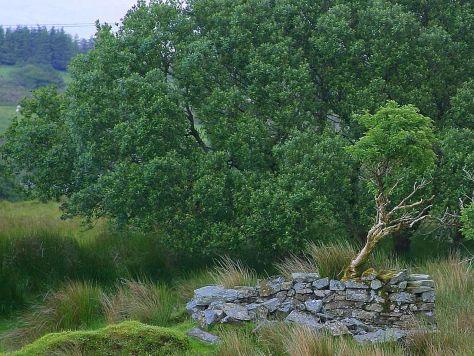 Glengesh Pass in Ireland, by Jon Sullivan. Photo courtesy Mr. Sullivan and Public Domain Images.