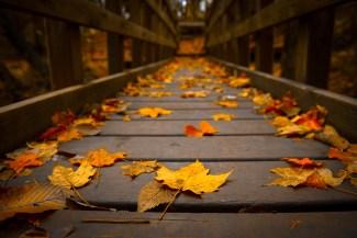 Falling leaves on a bridge. Image courtesy of Best Wallpaper Design.
