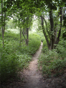 A pathway through the green, on one of my riverside walkabouts. Photo by Jamie Walters, New York, 2013. CC-SSA.