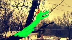 tree dragon modified