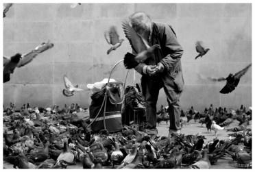 Old man & Birds