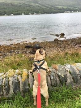 Tony surveying his kingdom after said trek