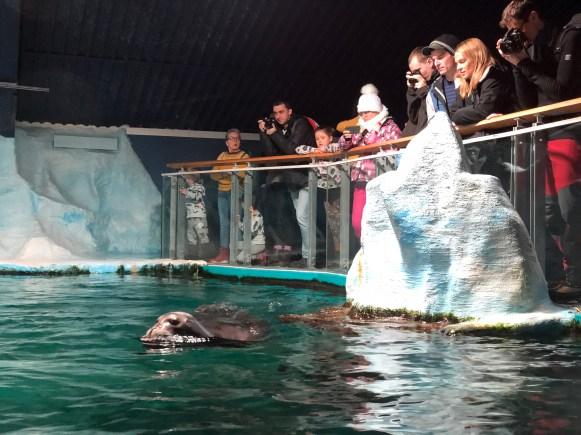 Polaria, lo show delle foche