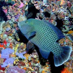 Diving Sites Globe 19
