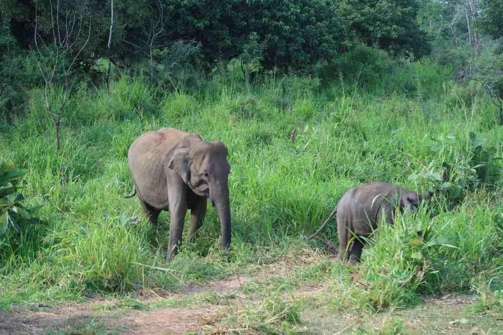 Elephant Safari Sri Lanka