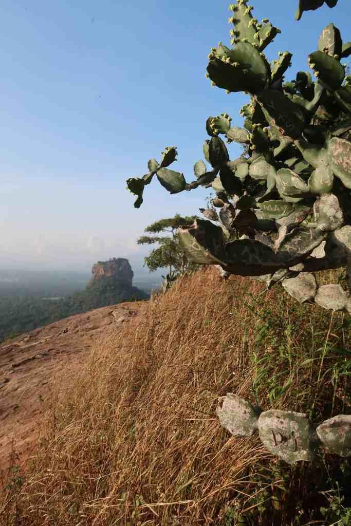 views from Pidurangala Rock