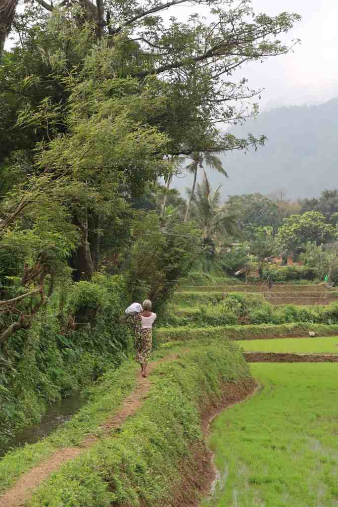 Riverston Matale rice paddies