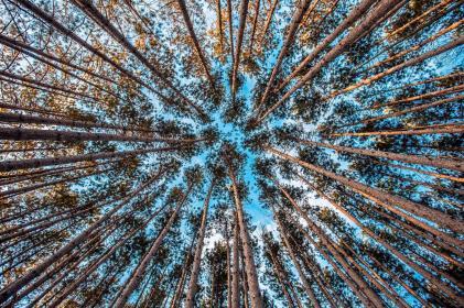 Sophrologue Aix en Provence, Denis Di Russo, association, paysage de Forêt