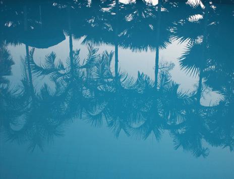 Mer palmiers et soleil