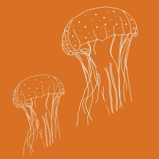 jellyfish white outline