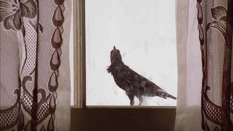 A bird sitting on the window sill during Christopher's making ceremony