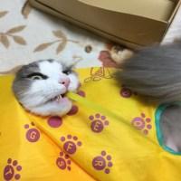 猫のおもちゃにウキウキ、人のおもちゃにビクビク