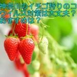 神奈川のイチゴ狩りのコロナウイルス対策は大丈夫?おすすめは?