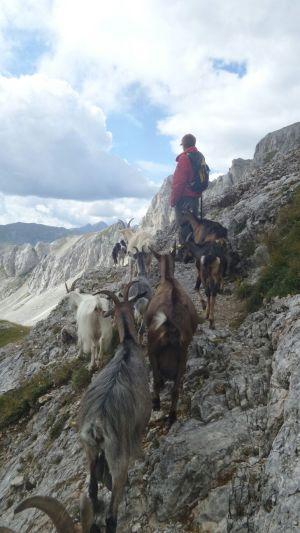 Sebastian e le capre in alpeggio