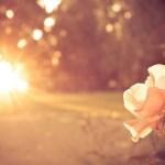 İlahi Adalet (11) : Allah dünya hayatını neden yarattı?