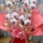 母へ贈り物・胡蝶蘭で元気を取り戻した!