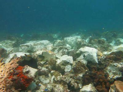 trumbu karang Raja Ampat