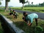 Penanaman Refugia oleh Petani dan Babinsa di Karangduren Kabupaten Jember untuk mengantisipasi serangan hama wereng