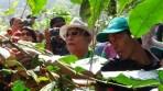 Kepala Staf Kepresidenan Jend. TNI (Purn) Moeldoko saat kegiatan panen kopi di Gunung Puntang, Kecamatan Cimaung, Kabupaten Bandung, memberikan keterangannya terkait Keppres Pengangkatan CPNS Bidan Desa PTT