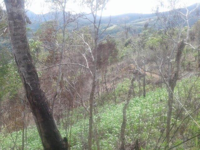 kondisi hutan lok pahar