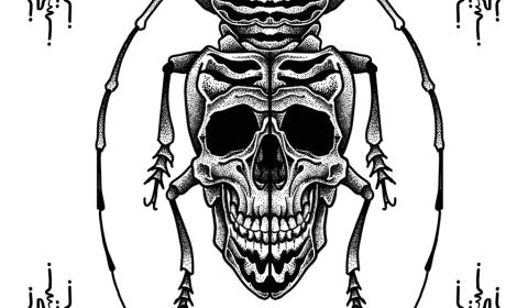 Flash insecte tête de mort dot