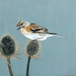 """Brambling on Thistle"" - Open Edition Print by Lara Cobden"