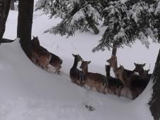 Parc Omega, daim, cerf, animaux