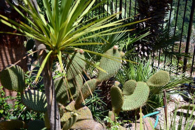 Ezr jardin botanique 210714 BL 037