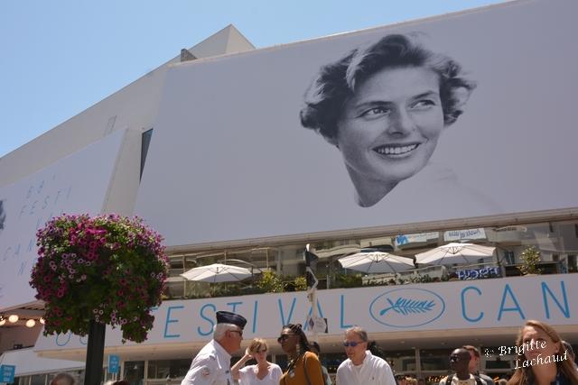 Festi Cannes