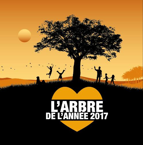 L'IF-IGLOO DE GERBEROY(OISE) : ARBRE DE L'ANNEE 2017