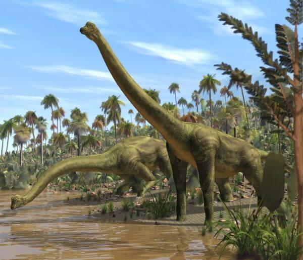 Dinosaur Names - Brachiosaurus