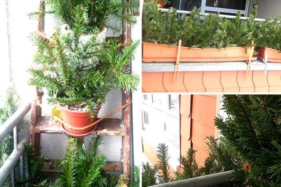 Knut war gestern: Jetzt Weihnachtsbaum weiterverwenden