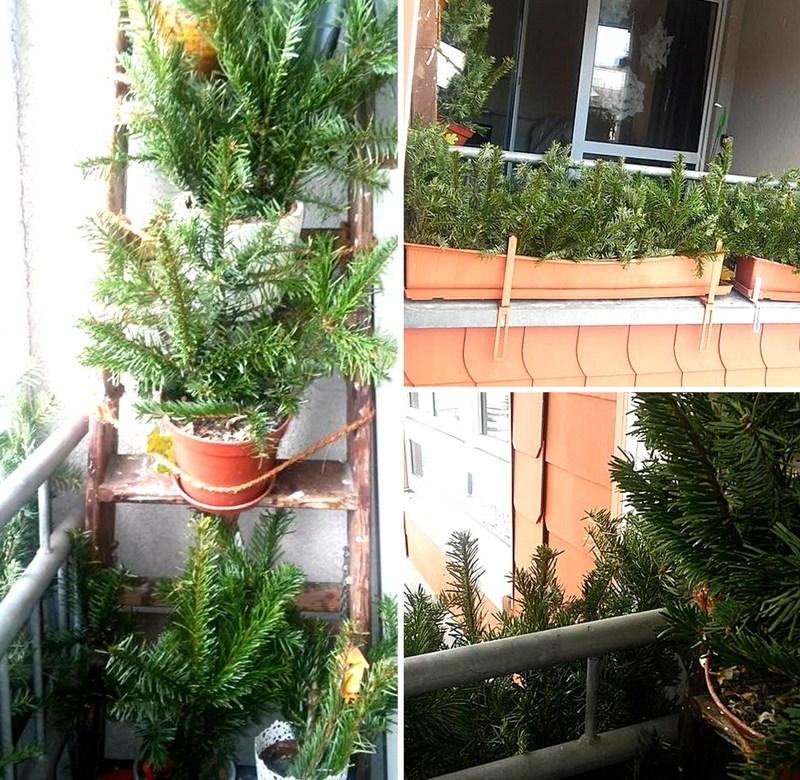 Weihnachtsbaum verwerten